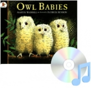 Pictory Set PS-34 : Owl Babies (Paperback Set)